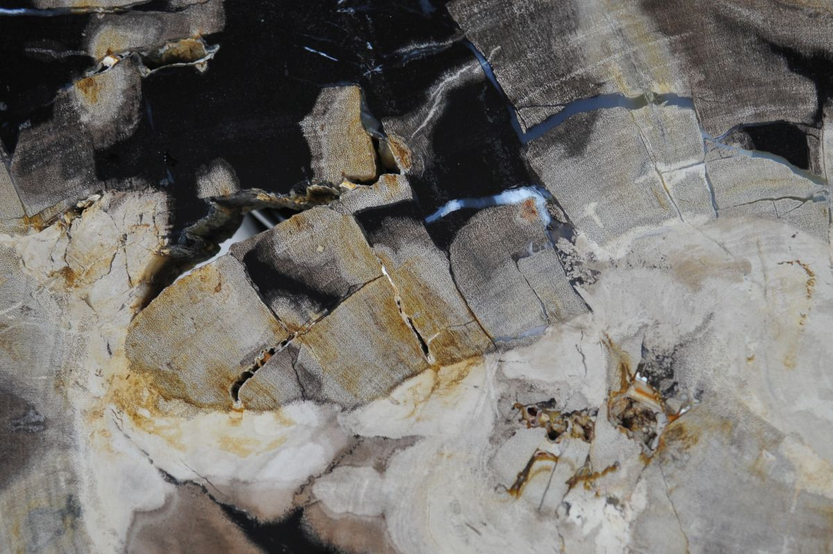 Coffee table petrified wood 36223