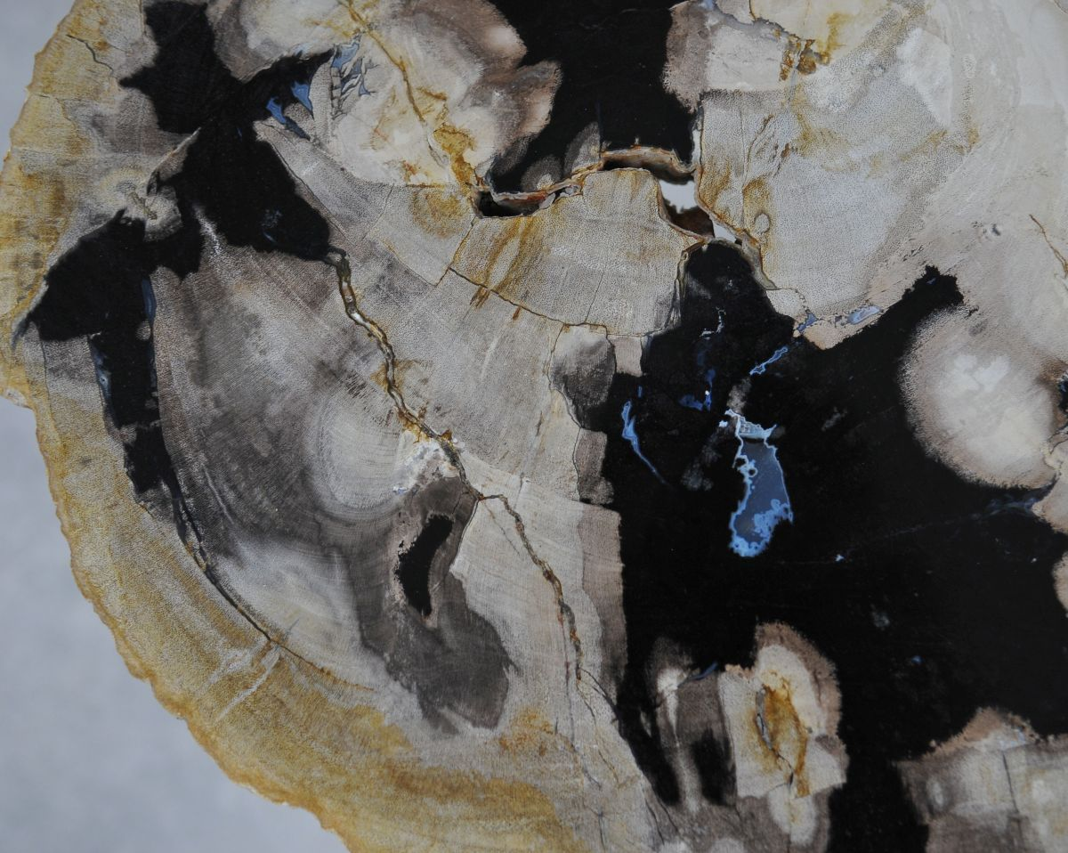 Coffee table petrified wood 36224