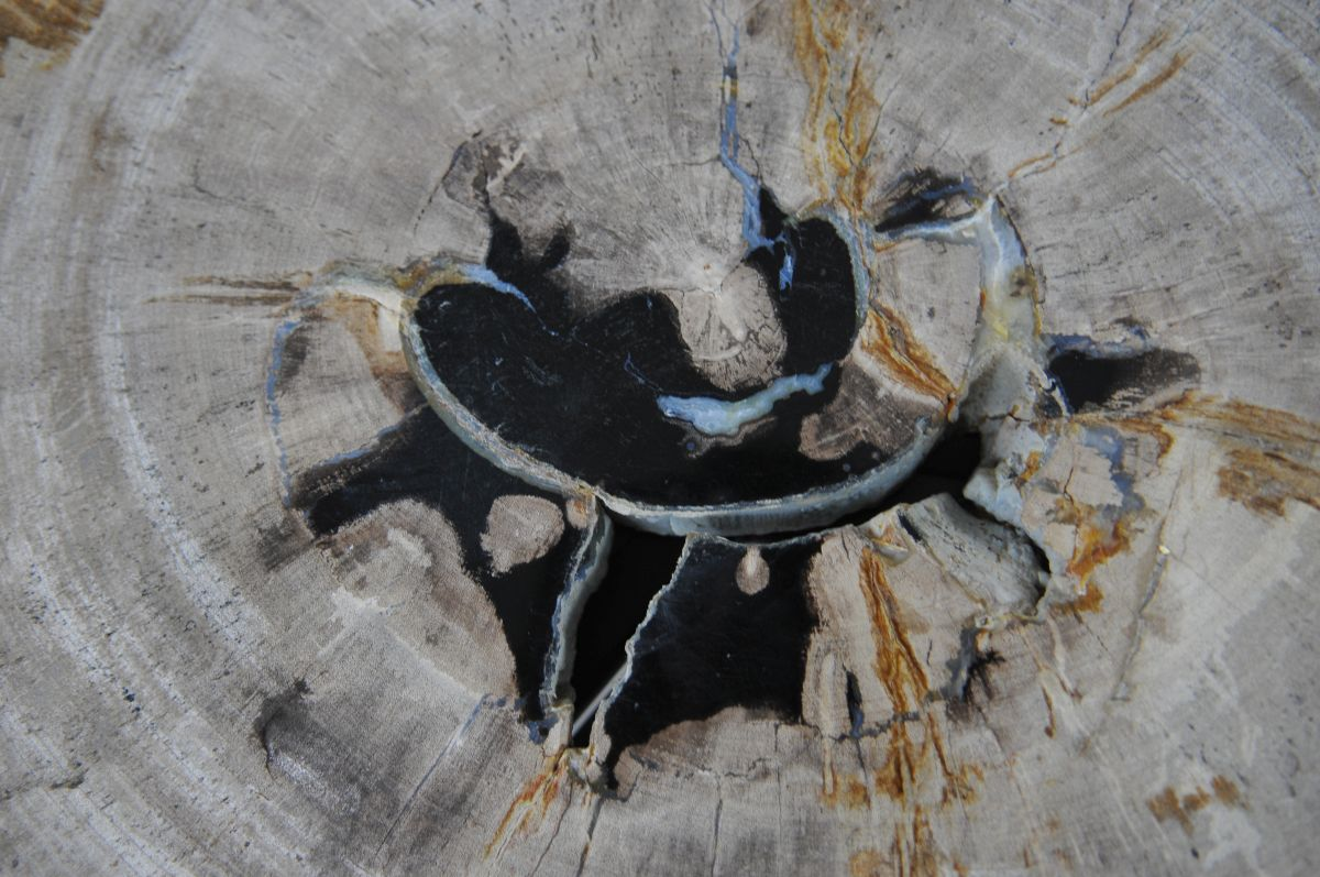 Coffee table petrified wood 36230