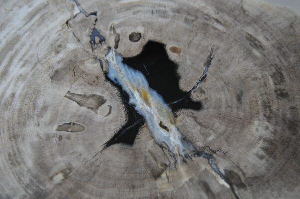 Coffee table petrified wood 36234