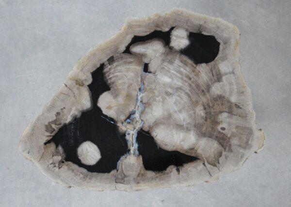 Coffee table petrified wood 36237