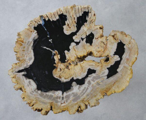 Coffee table petrified wood 36265