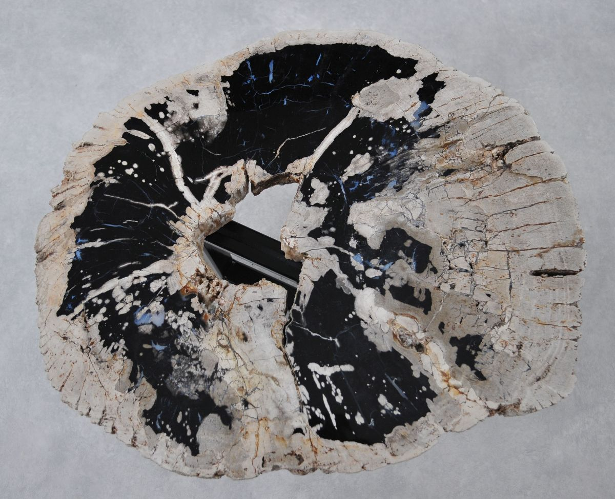 Coffee table petrified wood 36287