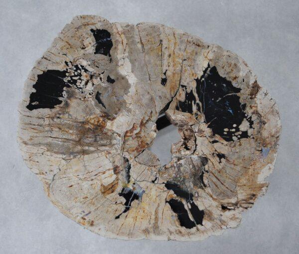 Coffee table petrified wood 36288