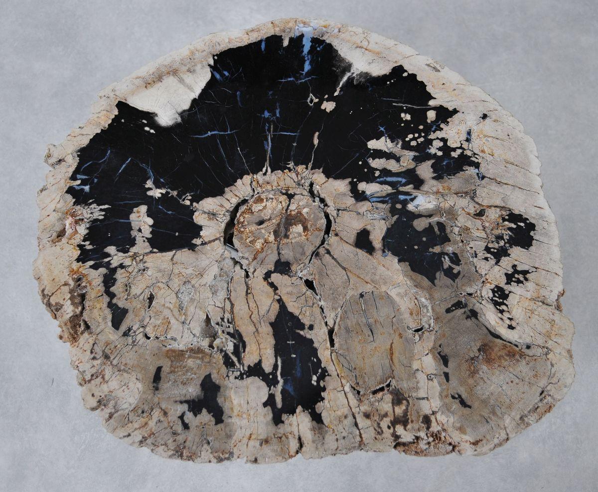 Coffee table petrified wood 36293