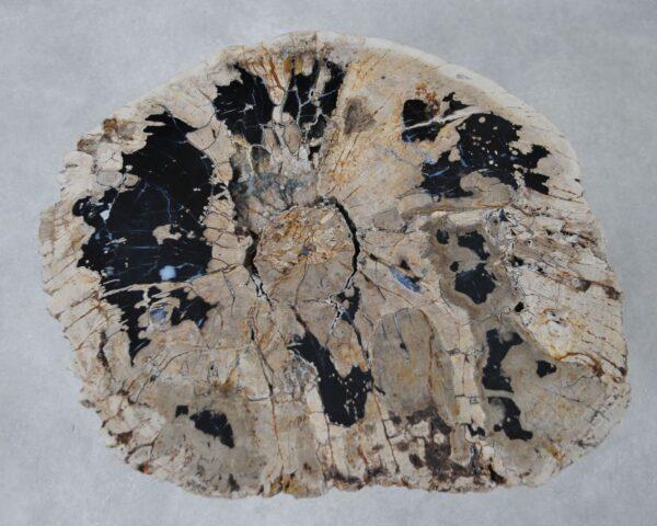 Coffee table petrified wood 36295