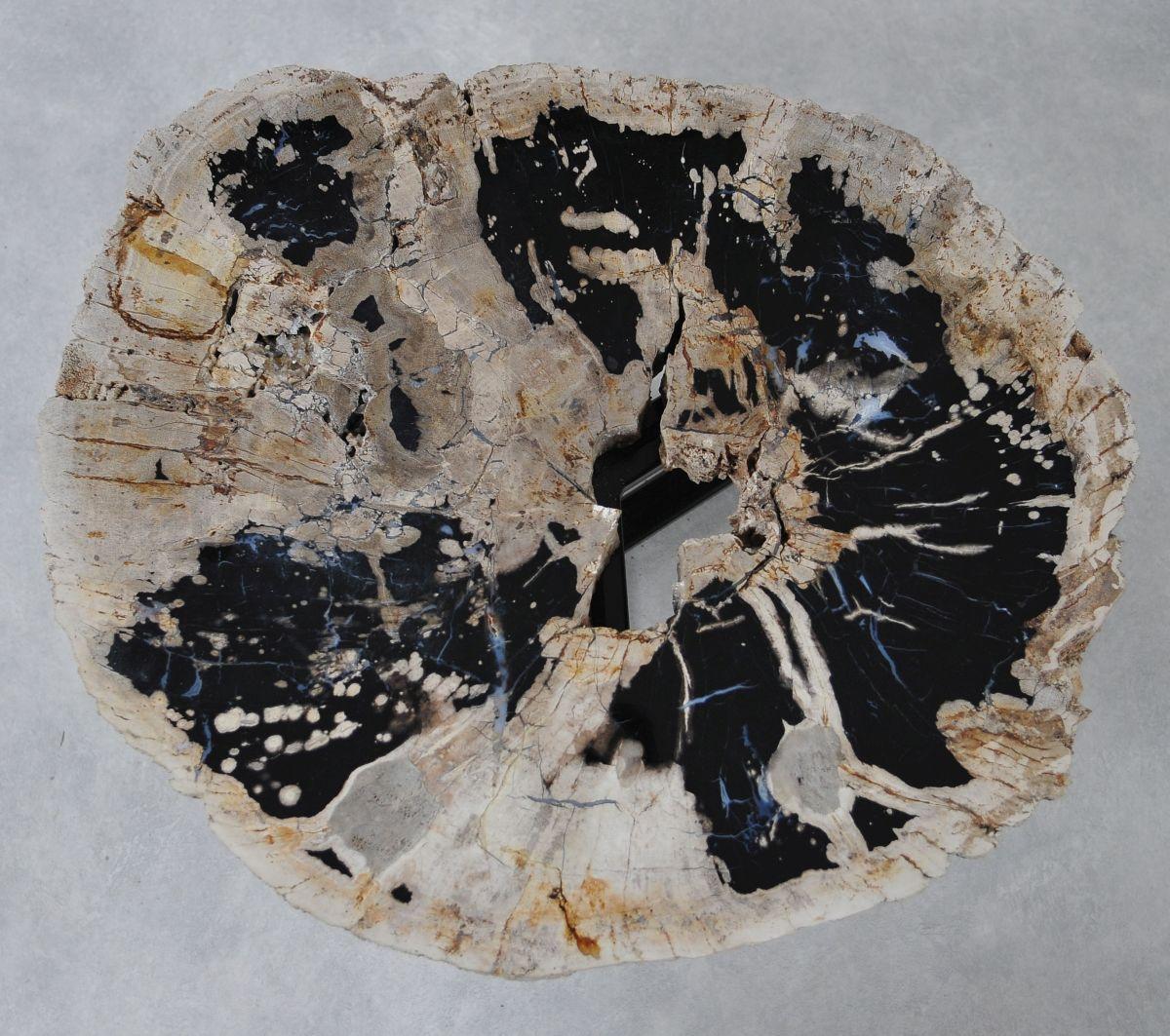 Coffee table petrified wood 36301