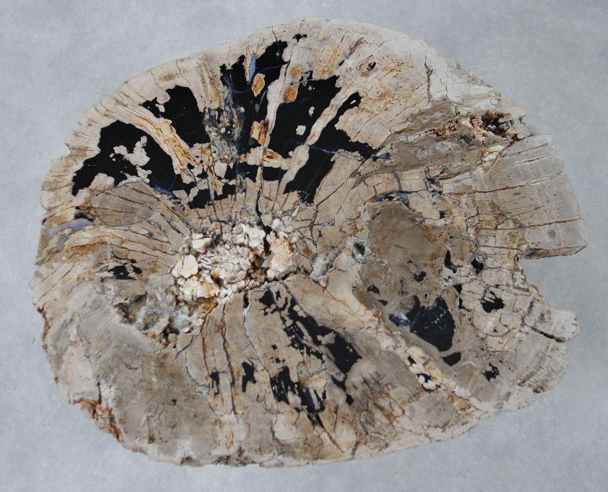 Coffee table petrified wood 36311