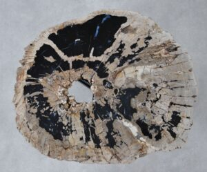 Coffee table petrified wood 36312