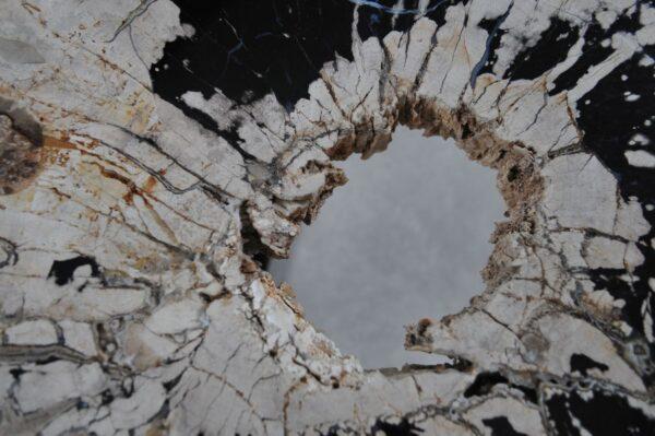 Coffee table petrified wood 36314