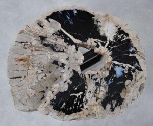 Coffee table petrified wood 36315