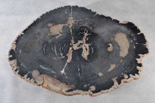 Coffee table petrified wood 36366