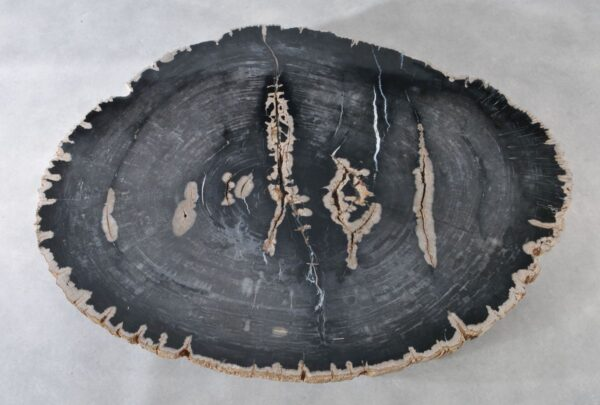 Coffee table petrified wood 36367