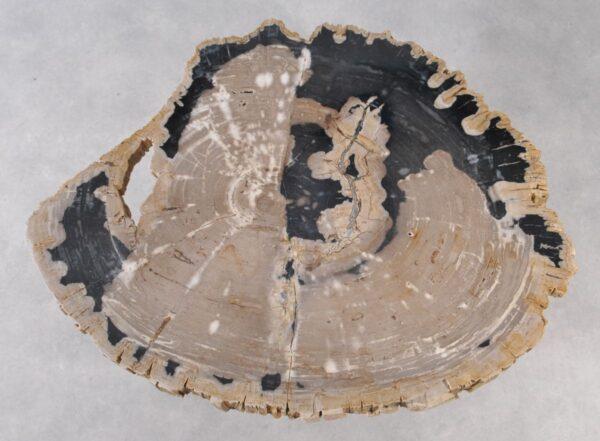 Couchtisch versteinertes Holz 36146
