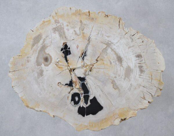 Couchtisch versteinertes Holz 36153