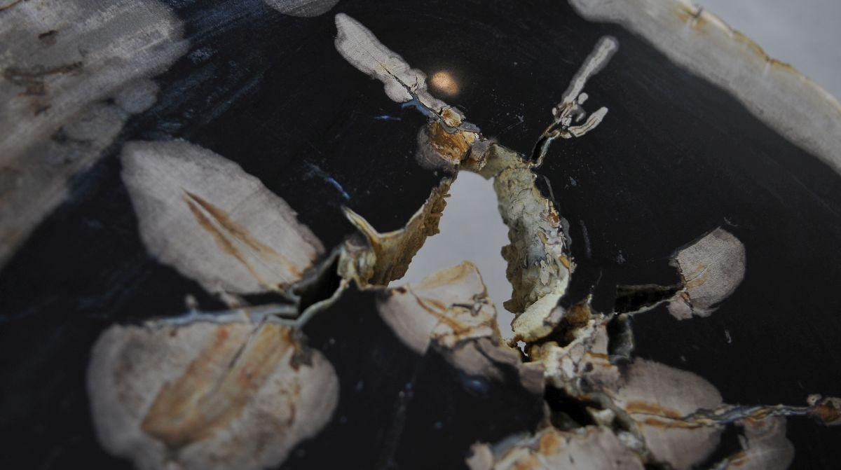 Couchtisch versteinertes Holz 36156