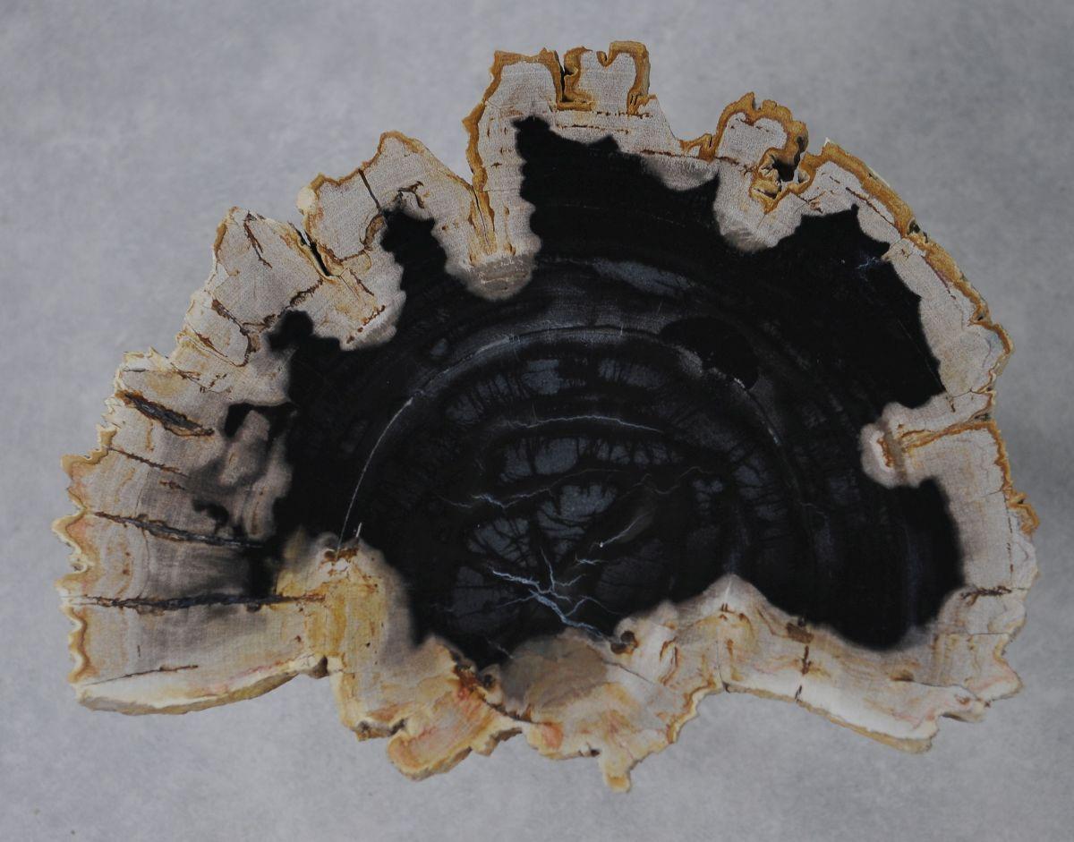 Couchtisch versteinertes Holz 36161