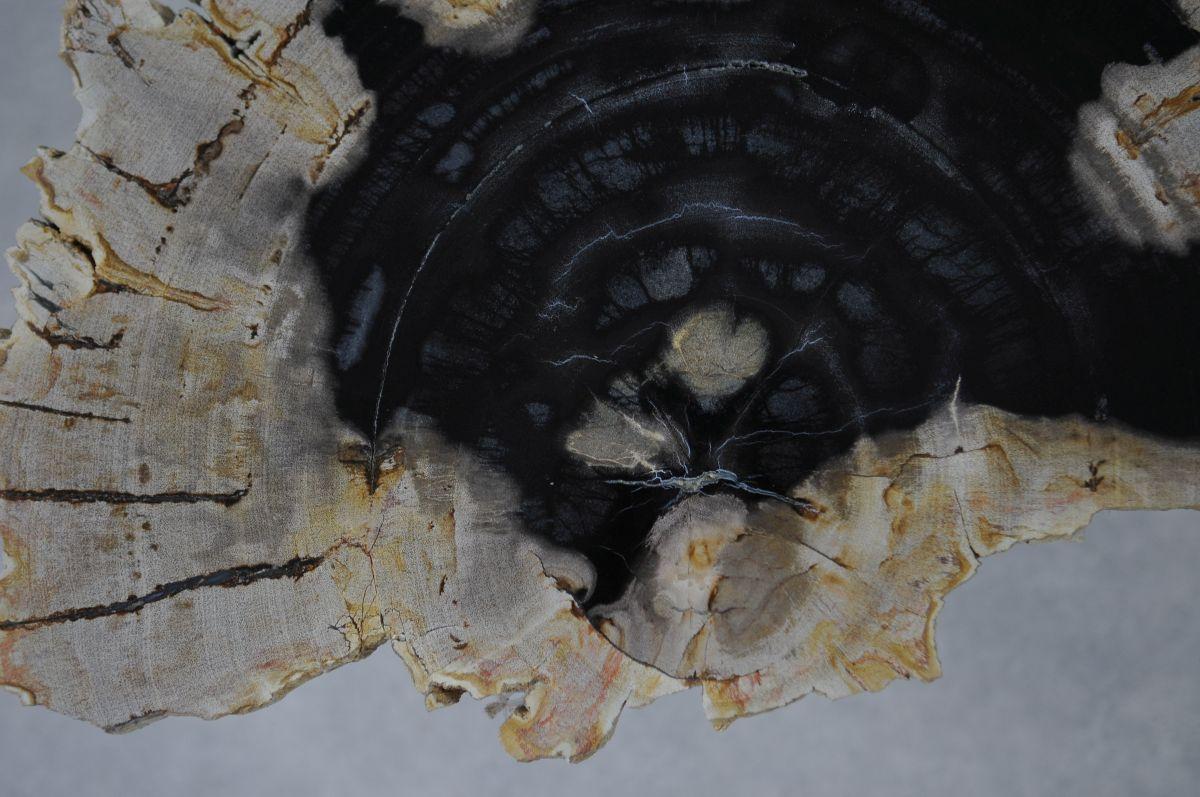 Couchtisch versteinertes Holz 36163