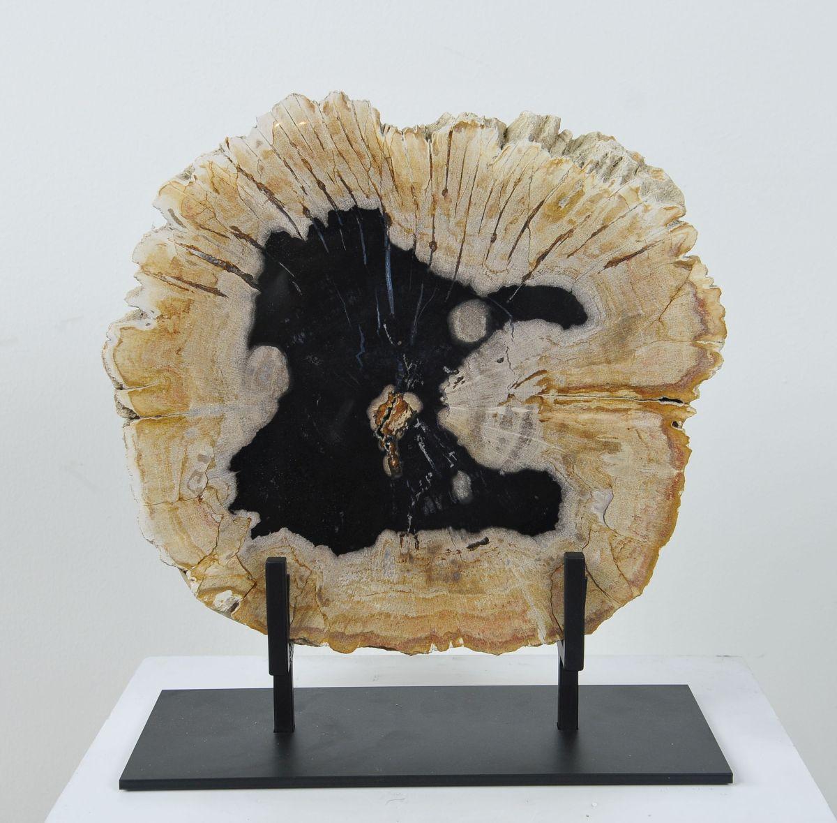 Couchtisch versteinertes Holz 36164