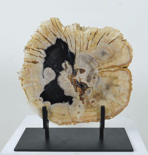 Couchtisch versteinertes Holz 36167