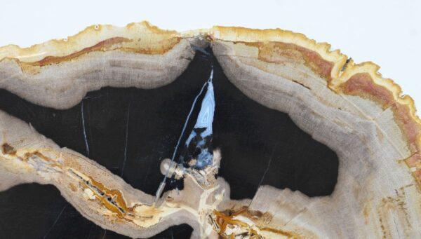 Couchtisch versteinertes Holz 36170