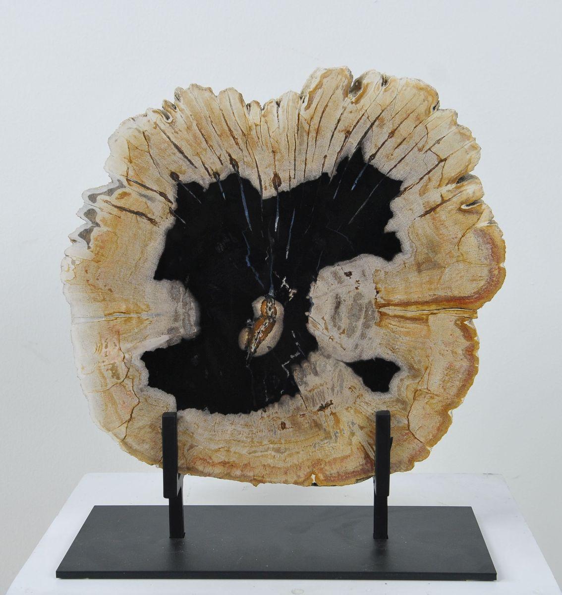 Couchtisch versteinertes Holz 36173