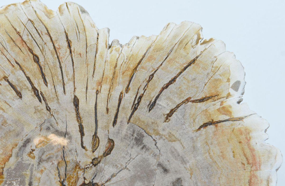 Couchtisch versteinertes Holz 36174