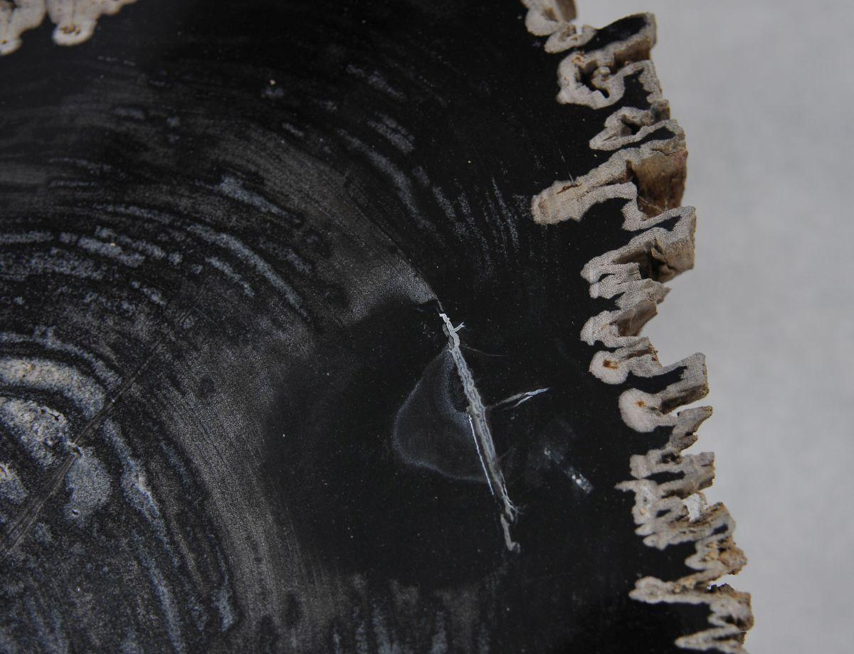 Couchtisch versteinertes Holz 36210