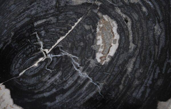Couchtisch versteinertes Holz 36211