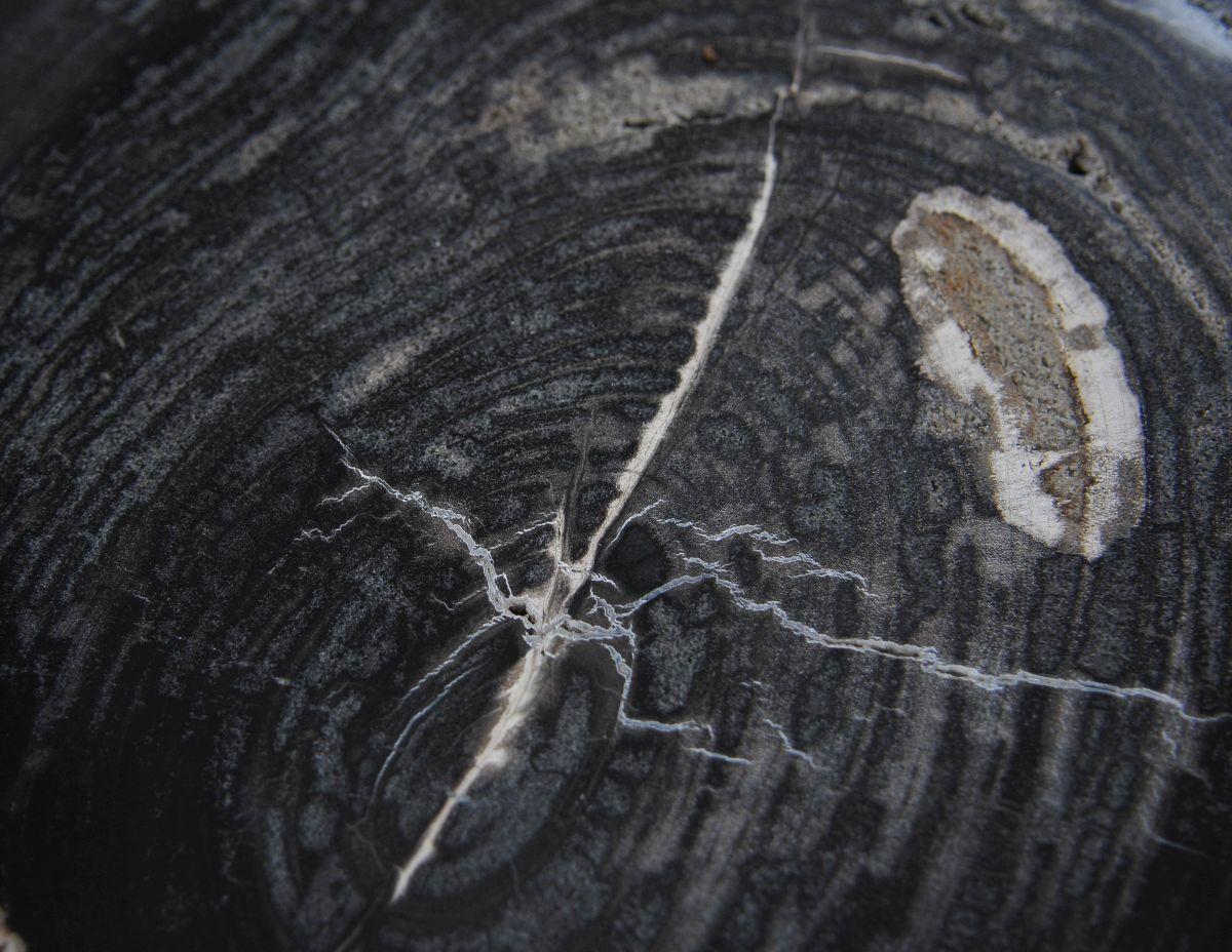 Couchtisch versteinertes Holz 36212