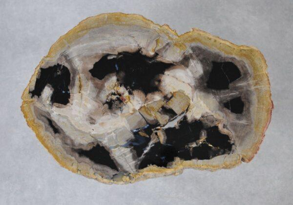 Couchtisch versteinertes Holz 36218