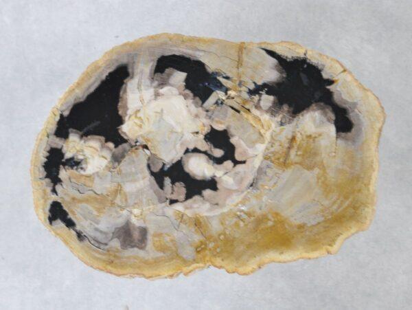 Couchtisch versteinertes Holz 36226