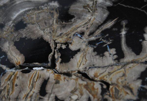 Couchtisch versteinertes Holz 36227