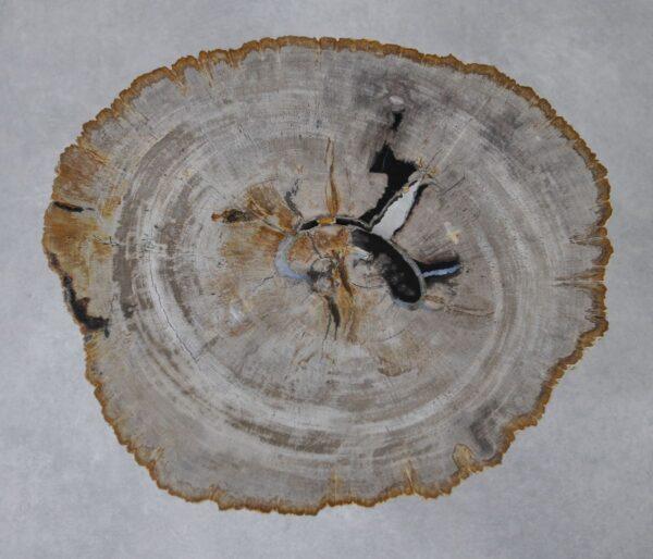 Couchtisch versteinertes Holz 36229