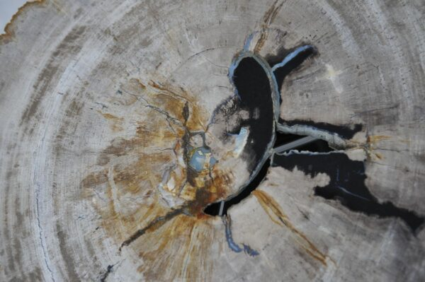 Couchtisch versteinertes Holz 36230