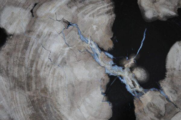 Couchtisch versteinertes Holz 36237