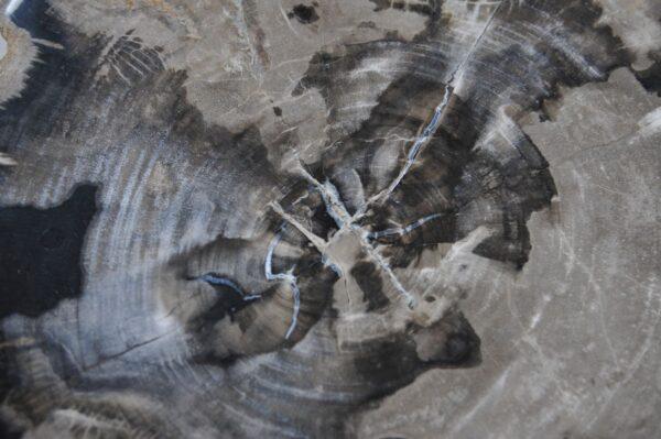 Couchtisch versteinertes Holz 36244