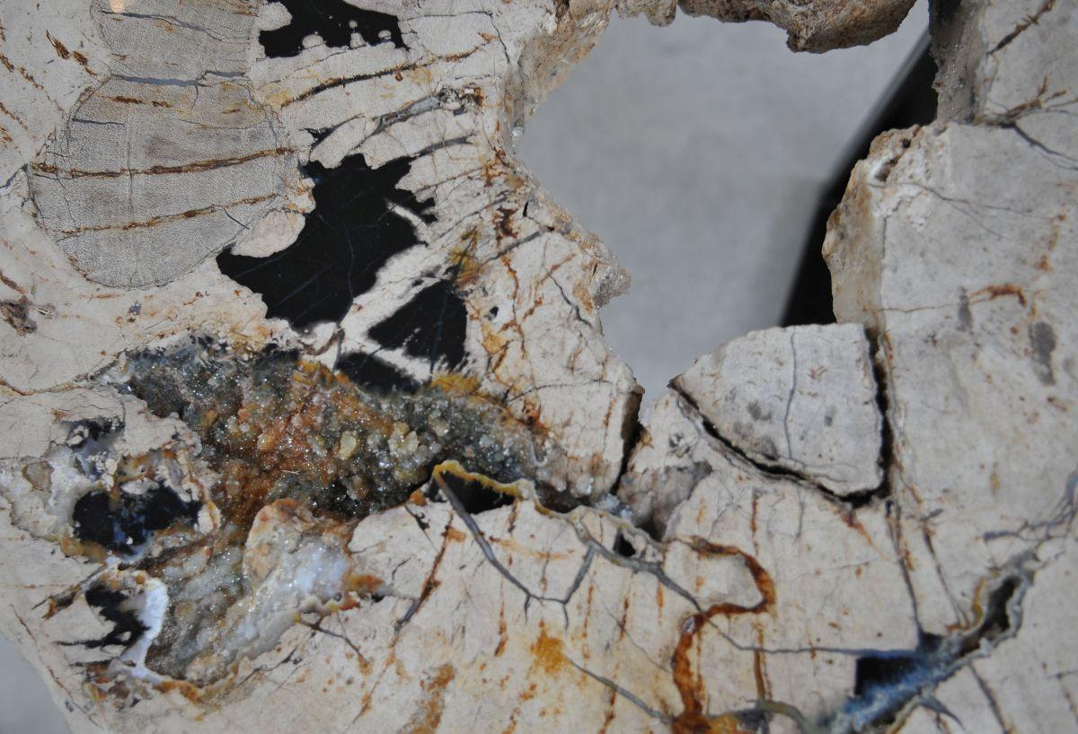 Couchtisch versteinertes Holz 36287