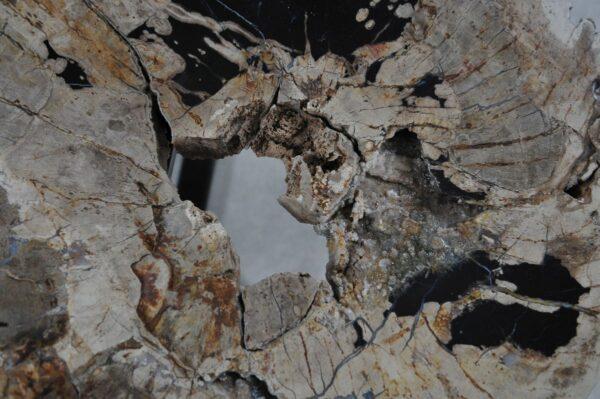 Couchtisch versteinertes Holz 36288