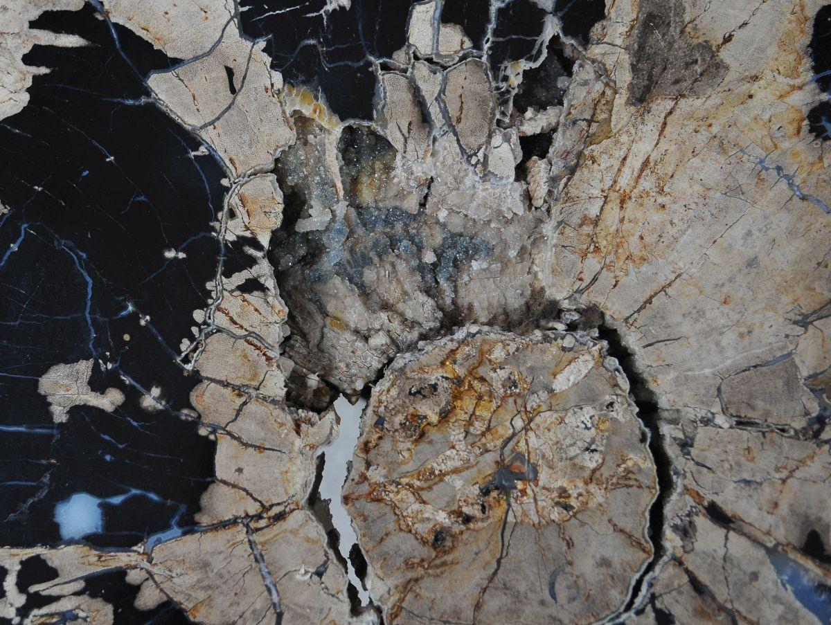 Couchtisch versteinertes Holz 36295