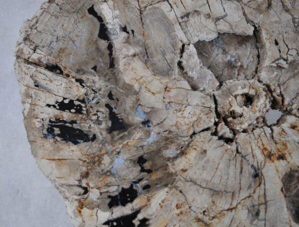Couchtisch versteinertes Holz 36296
