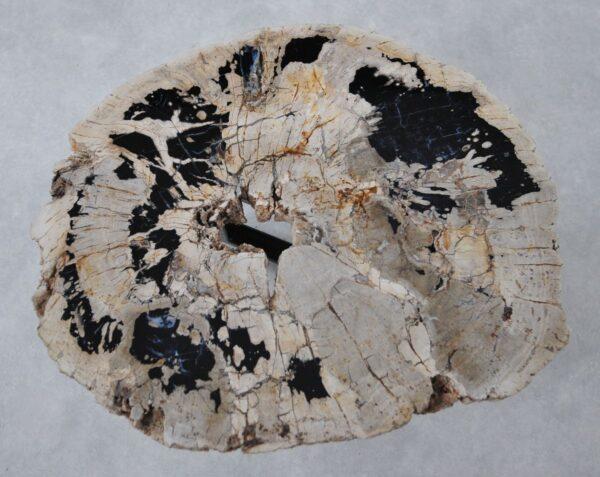 Couchtisch versteinertes Holz 36299