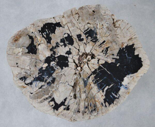 Couchtisch versteinertes Holz 36307