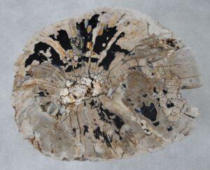 Couchtisch versteinertes Holz 36311
