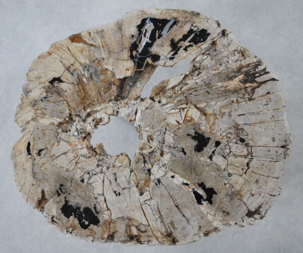 Couchtisch versteinertes Holz 36316