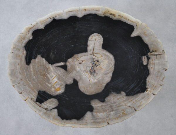 Couchtisch versteinertes Holz 36364