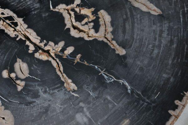 Couchtisch versteinertes Holz 36367