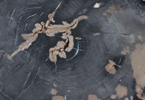 Couchtisch versteinertes Holz 36368