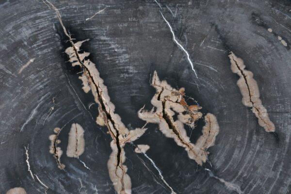 Couchtisch versteinertes Holz 36369