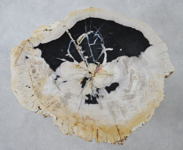 Mesa de centro madera petrificada 36150